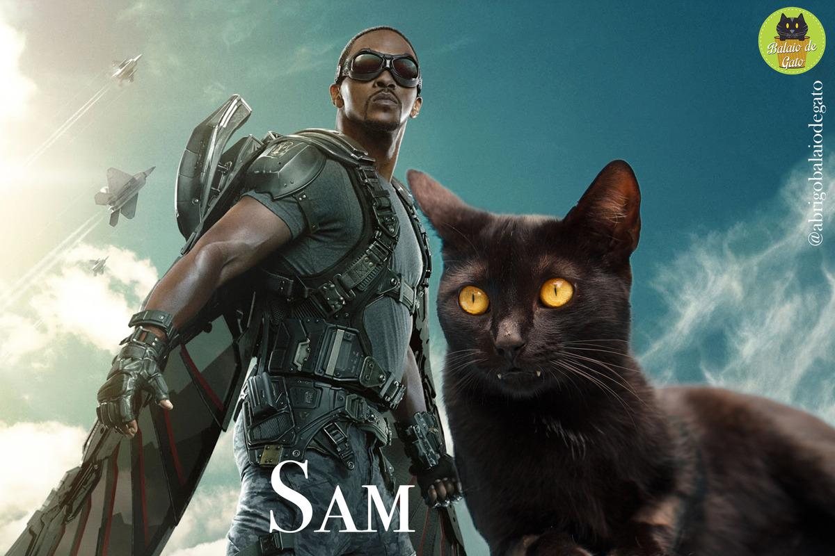 Gatinho preto de olhos amarelos e presas grandes de nome Sam com uma imagem do Sam Wilson Falcão ao fundo.