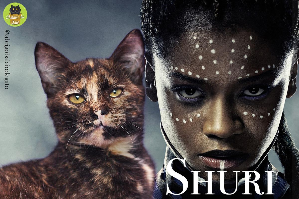 Gatinha escaminha de olhos amarelos com olhar penetrante de nome Shuri e ao fundo uma imagem da Shuri de Wakanda.