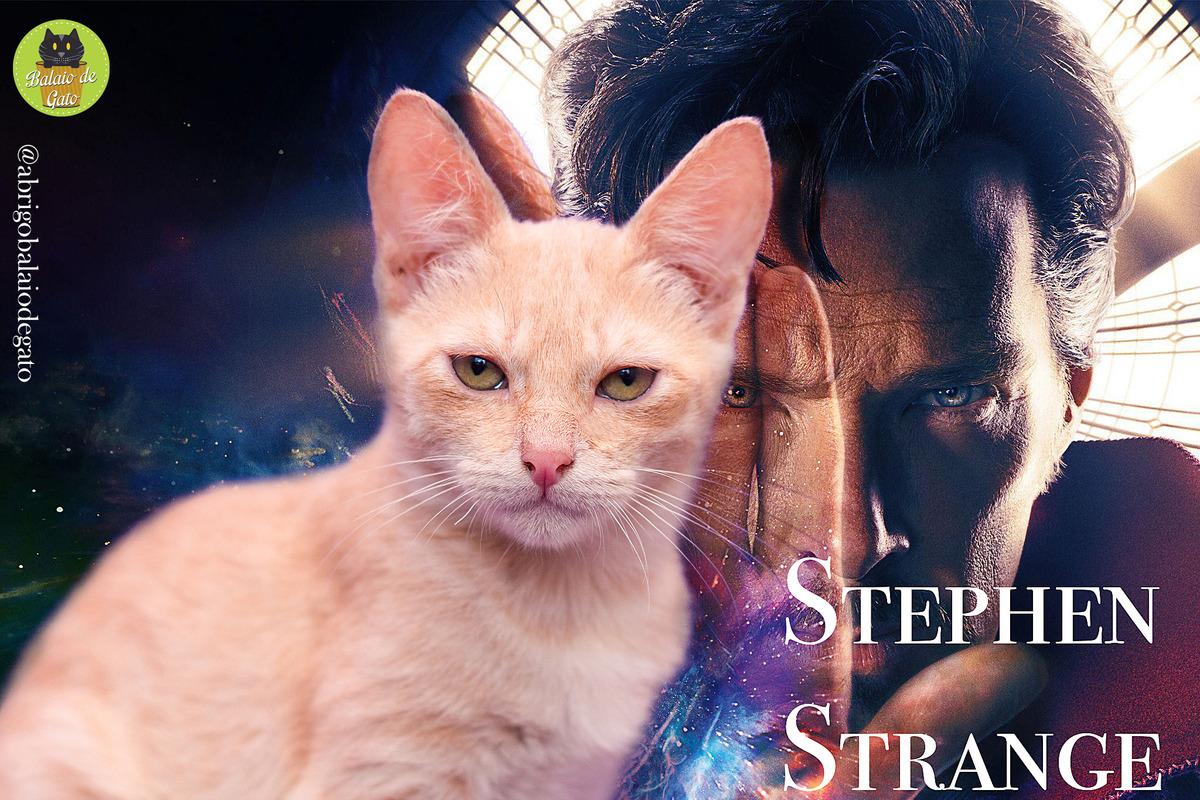 Gatinho amarelo creme de nome Stephen Strange sentado com um olhar penetrante e uma imagem do personagem Stephen Strange ao fundo.