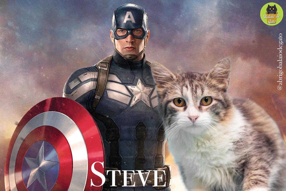 Gatinho tigrado e branco de nome Steve sentado olhando para a foto com uma imagem do Capitão América Steve Rogers ao fundo.