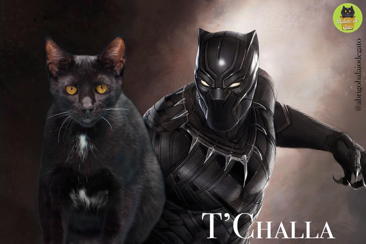 Gatinho preto de olhos amarelos de nome T'Challa sentado olhando para a foto com uma imagem do Pantera Negra, T'Challa ao fundo.