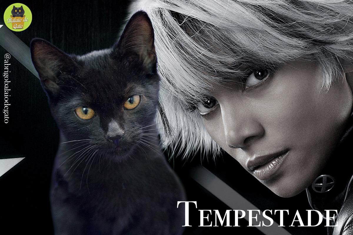 Gatinha preta de olhos amarelos penetrantes e nome Tempestade sentada encarando a câmera fotográfica e uma imagem da personagem dos X-Men Tempestade Ororo Munroe ao fundo.