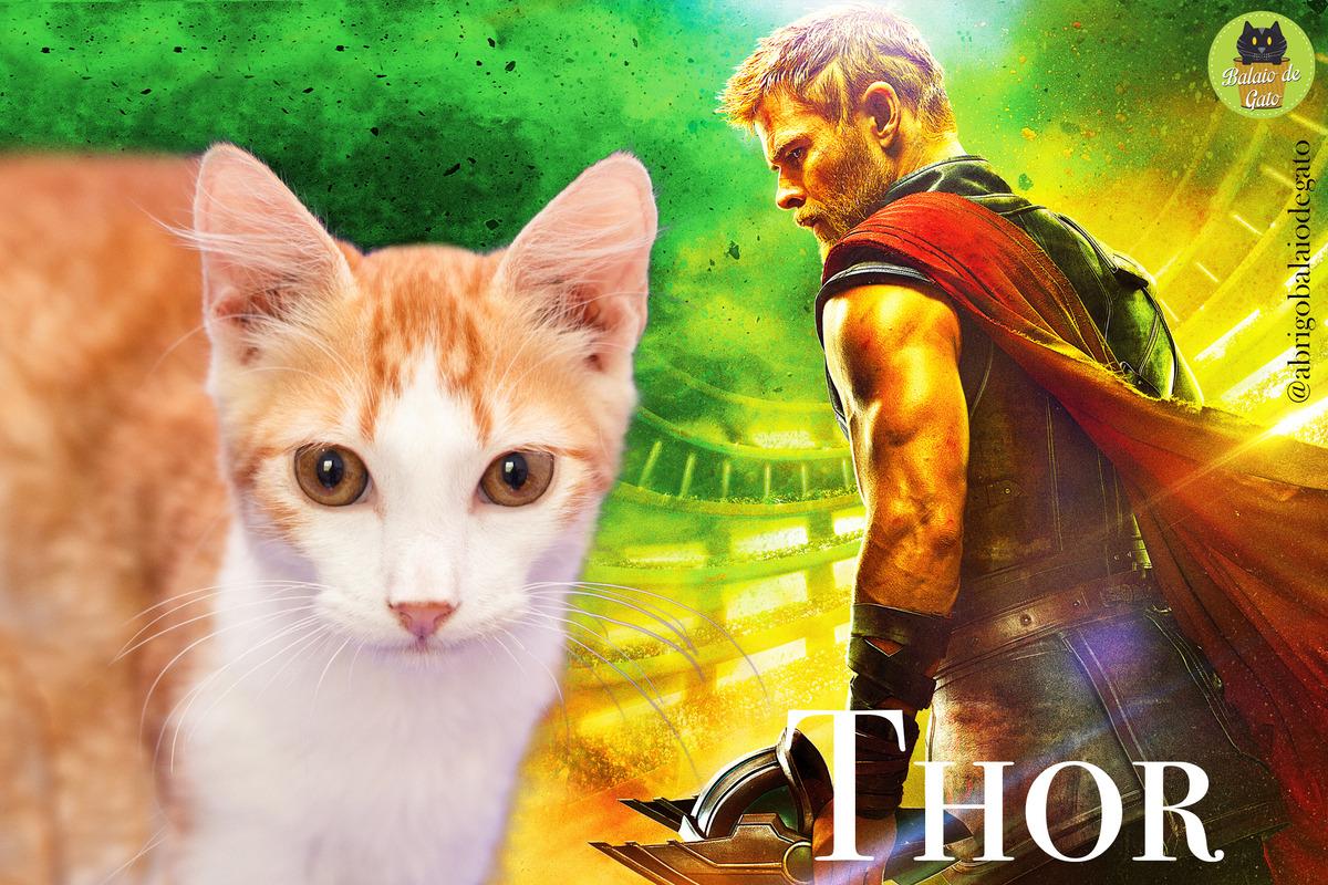 Gatinho amarelo e branco de nome Thor olhando para a câmera com uma imagem do Thor da Iniciativa Vingadores ao fundo.