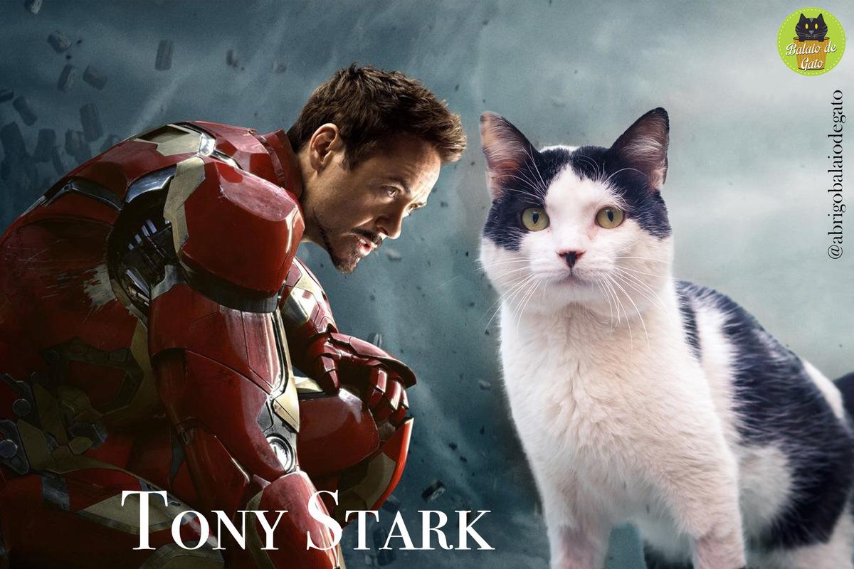 Gato branco e preto de pé olhando para a foto com uma imagem do Tony Stark Homem de Ferro ao fundo.