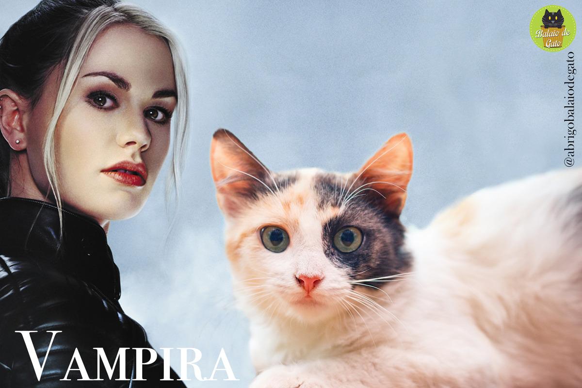 Gatinha tricolor bem clarinha de olhos verdes e nome Vampira e ao fundo uma imagem da personagem dos X-Men Vampira Anna Marie LeBeau.
