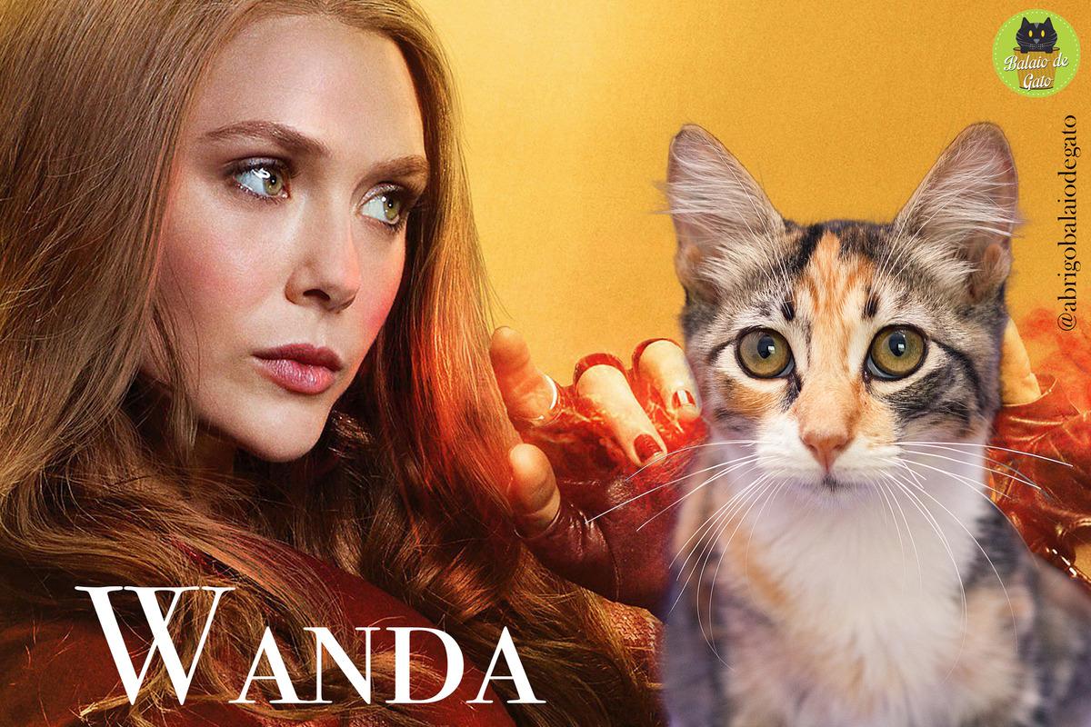 Gatinha tricolor de olhos amarelos  de nome Wanda sentada olhando para a câmera fotográfica e uma imagem da Feiticeira Escarlate Wanda Maximinoff ao fundo.