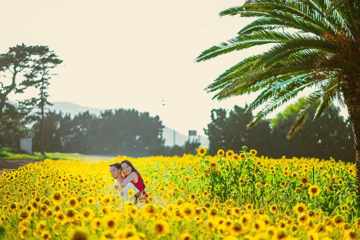 campo de flores no japao, girassol no japao, fotografo no japao, tahara